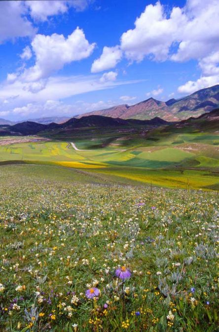 Beauti_1841_beautiful-meadow-scenery