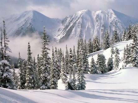 winter_scene_with_snow