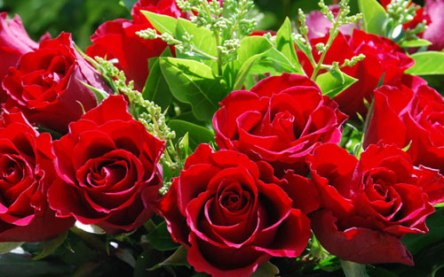 red-roses-for-valenines-day